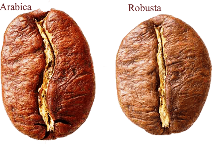 Robusta-and-Arabica-bean-768×469-min