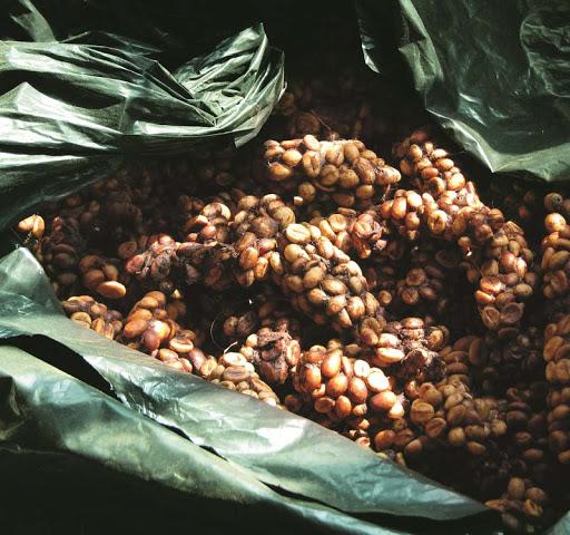 Cafe chồn Kopi Luwak