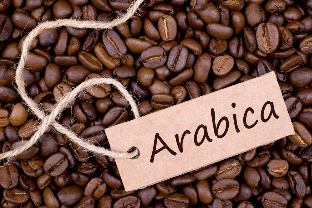 Hương Vị Cà Phê Arabica Có Gì Đặc Biệt -Cafe Arabica Ngon